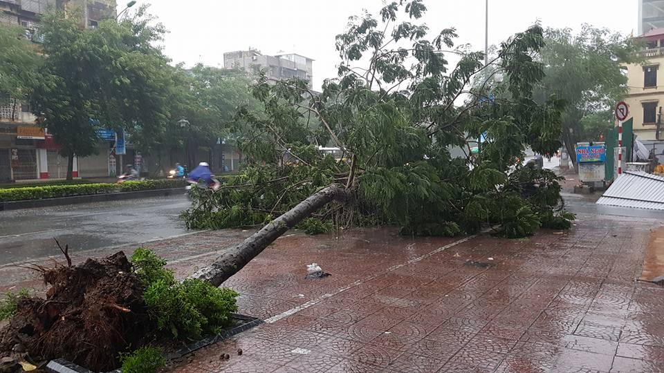 Bão số 1 đã suy yếu thành áp thấp nhiệt đới - 2