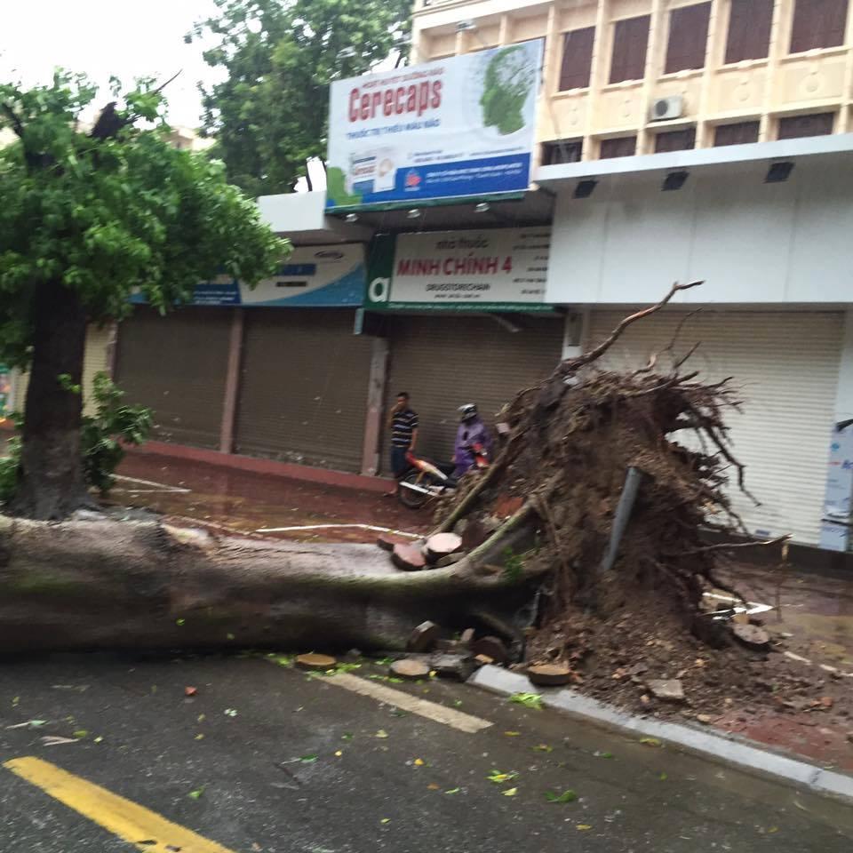 HN: Gió giật cực mạnh, cây đổ ngổn ngang do bão số 1 - 18