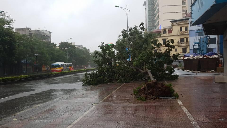 HN: Gió giật cực mạnh, cây đổ ngổn ngang do bão số 1 - 19