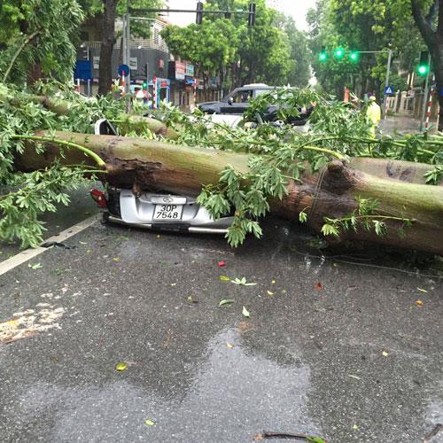HN: Gió giật cực mạnh, cây đổ ngổn ngang do bão số 1 - 15