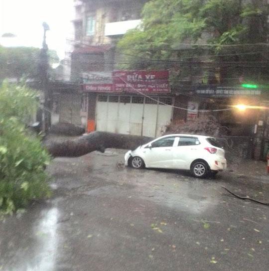 HN: Gió giật cực mạnh, cây đổ ngổn ngang do bão số 1 - 14