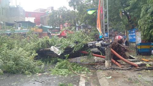 HN: Gió giật cực mạnh, cây đổ ngổn ngang do bão số 1 - 20