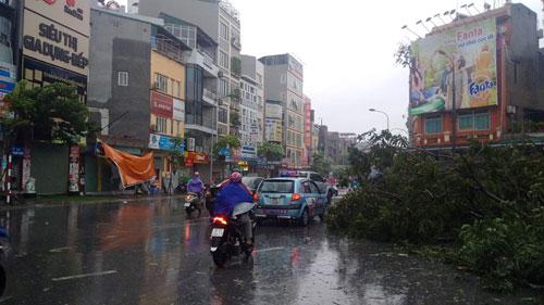 HN: Gió giật cực mạnh, cây đổ ngổn ngang do bão số 1 - 21