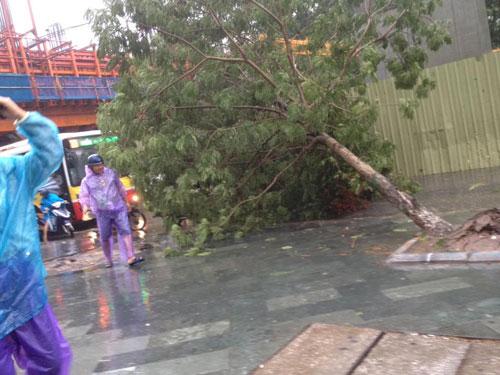 HN: Gió giật cực mạnh, cây đổ ngổn ngang do bão số 1 - 27