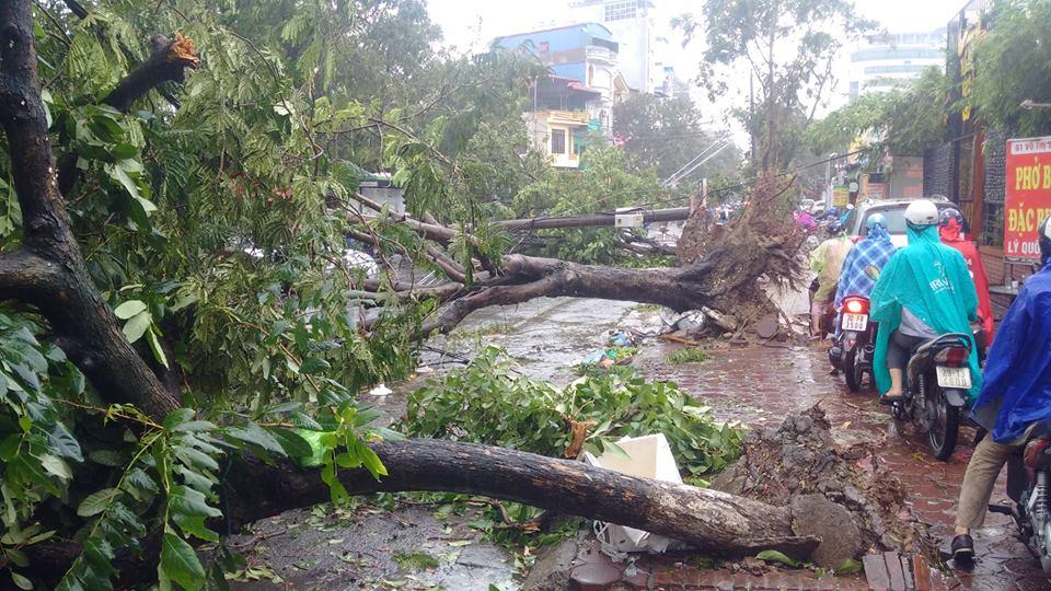 HN: Gió giật cực mạnh, cây đổ ngổn ngang do bão số 1 - 24