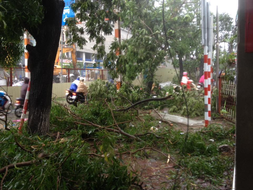 HN: Gió giật cực mạnh, cây đổ ngổn ngang do bão số 1 - 30