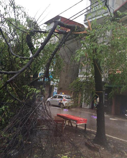 HN: Gió giật cực mạnh, cây đổ ngổn ngang do bão số 1 - 31
