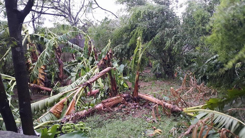 Bão số 1 càn quét, các tỉnh ven biển miền Bắc thiệt hại nặng nề - 9