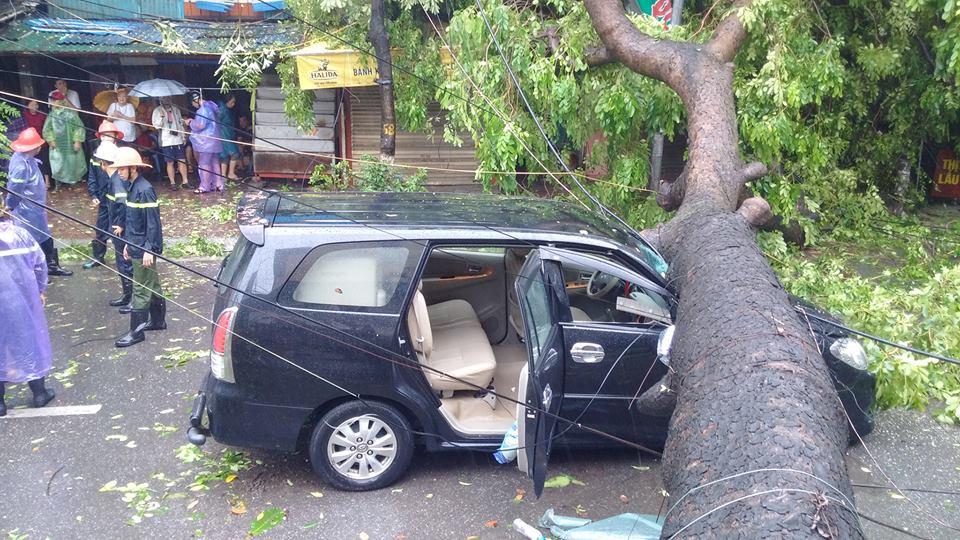 Xà cừ đổ ngang ô tô, 2 bố con thoát chết trong gang tấc - 1