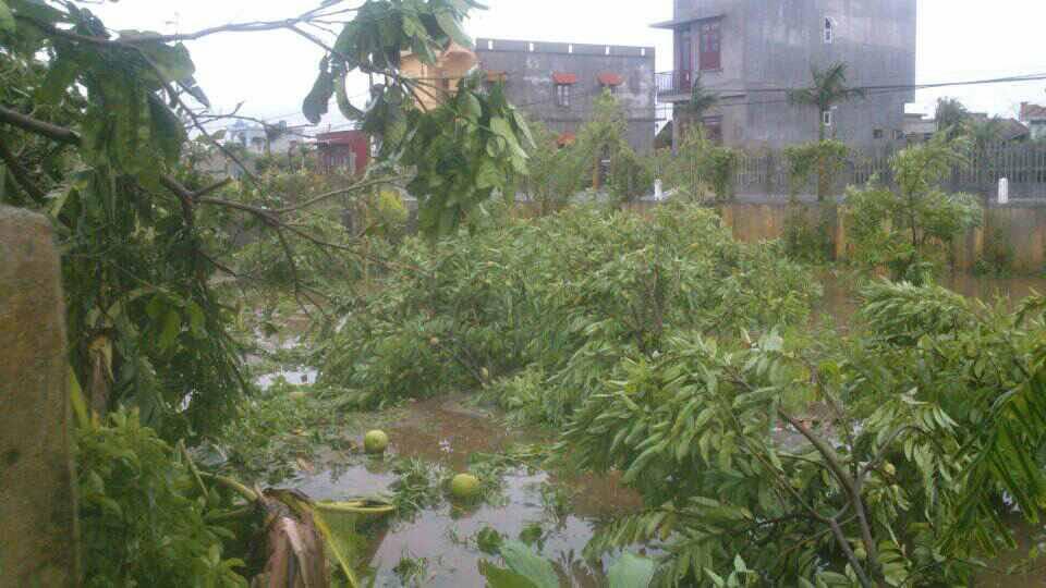 Bão số 1 càn quét, các tỉnh ven biển miền Bắc thiệt hại nặng nề - 10
