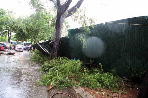 HN: Gió giật cực mạnh, cây đổ ngổn ngang do bão số 1 - 5