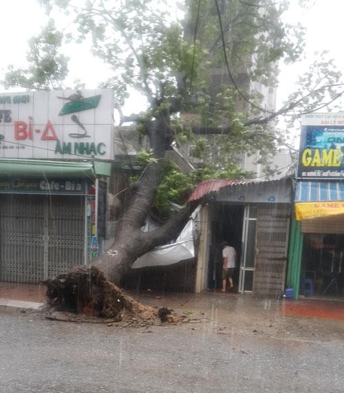 HN: Gió giật cực mạnh, cây đổ ngổn ngang do bão số 1 - 4