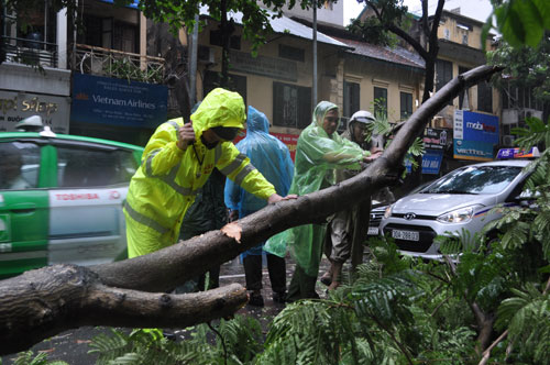 HN: Gió giật cực mạnh, cây đổ ngổn ngang do bão số 1 - 2