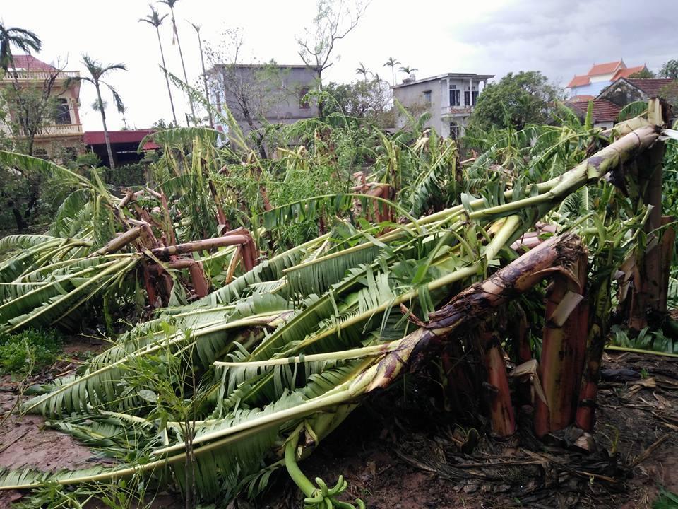 Bão số 1 càn quét, các tỉnh ven biển miền Bắc thiệt hại nặng nề - 5