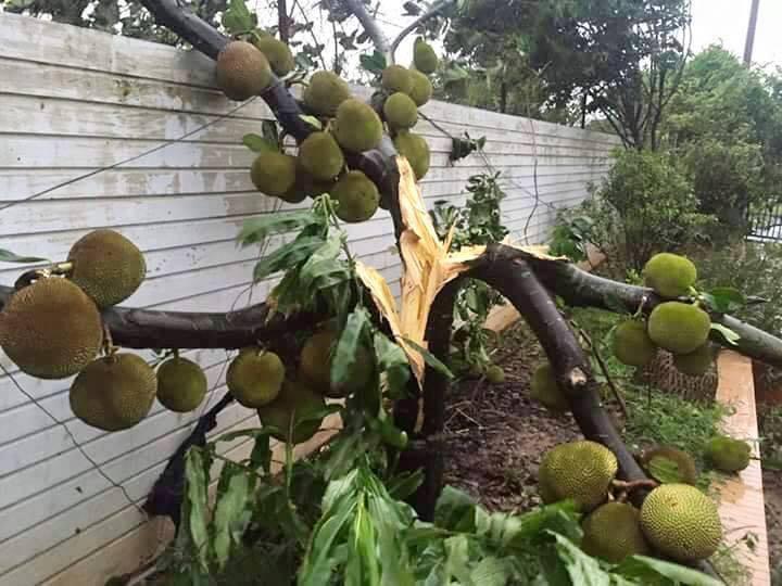 Bão số 1 càn quét, các tỉnh ven biển miền Bắc thiệt hại nặng nề - 6