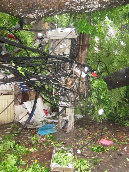 EVN cảnh báo nguy hiểm do bão số 1 gây tổn hại lưới điện - 2