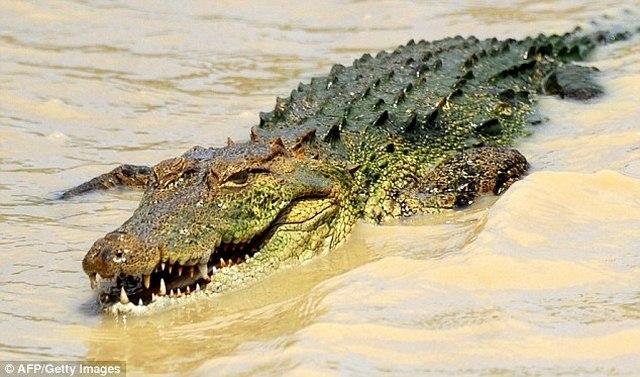 Làm sao để sống sót nếu bị rắn, sư tử, cá sấu tấn công? - 8