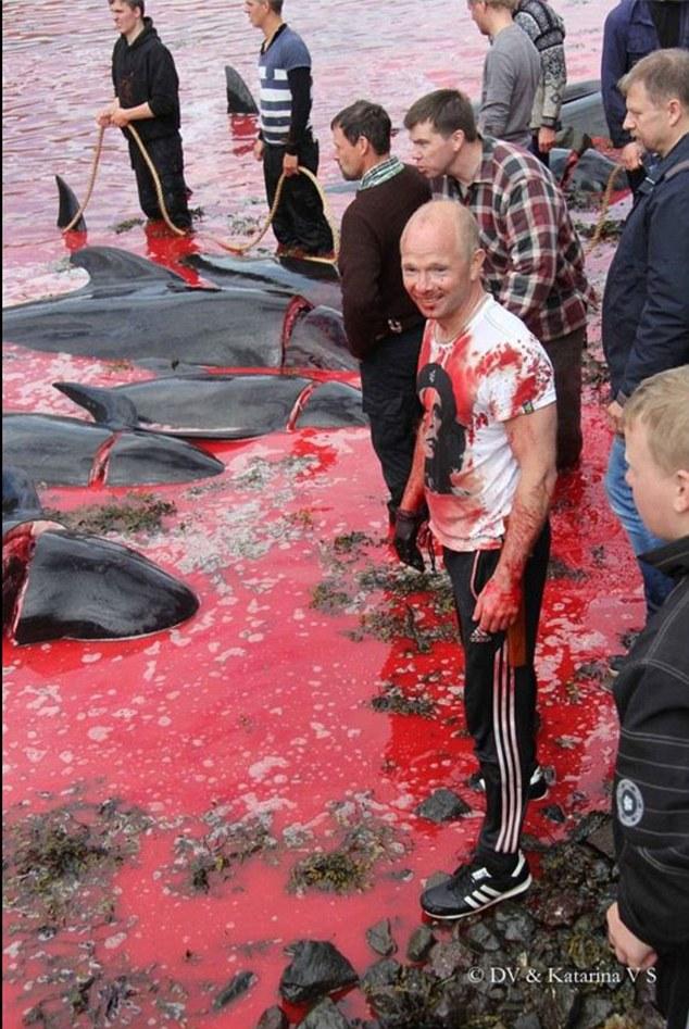 Thảm sát 120 cá voi ở Đan Mạch, cả vùng biển đỏ máu - 2