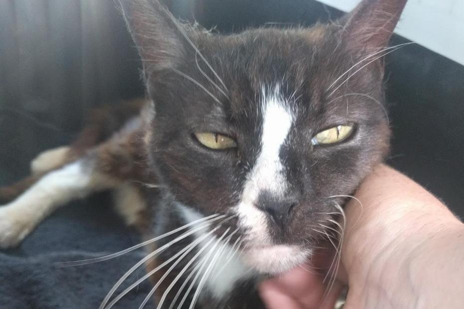 Chú mèo mất tích ở London, phiêu bạt qua biển đến Paris - 1