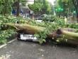HN: Gió giật cực lớn, cây đổ ngổn ngang do bão số 1
