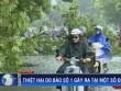 Thống kê thiệt hại do bão số 1 ở miền Bắc