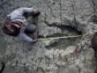 Phát hiện dấu chân khủng long 80 triệu năm ở Bolivia