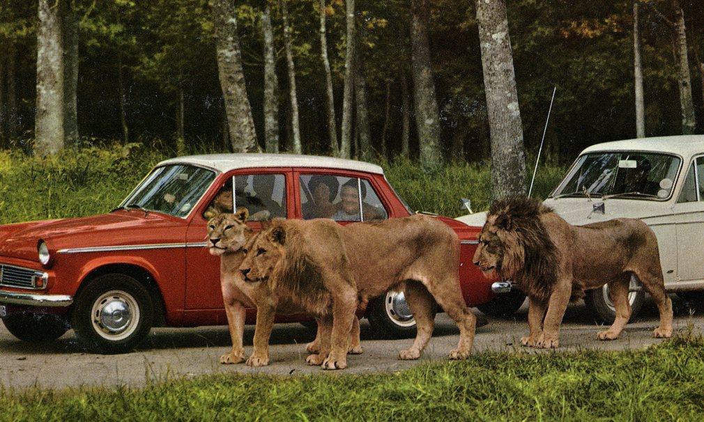 Du lịch Anh, đừng bỏ qua công viên thú hoang dã Longleat - 3