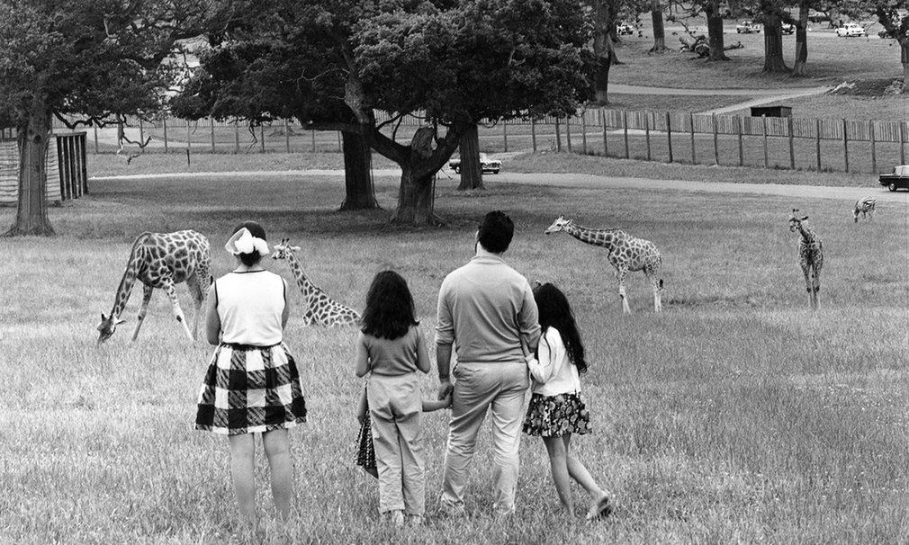 Du lịch Anh, đừng bỏ qua công viên thú hoang dã Longleat - 4