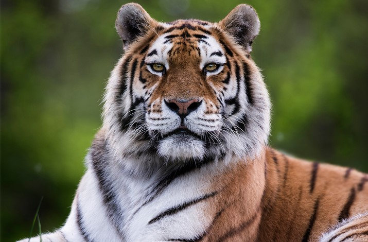 Du lịch Anh, đừng bỏ qua công viên thú hoang dã Longleat - 8