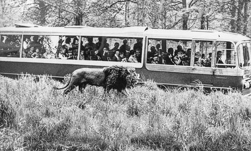 Du lịch Anh, đừng bỏ qua công viên thú hoang dã Longleat - 2