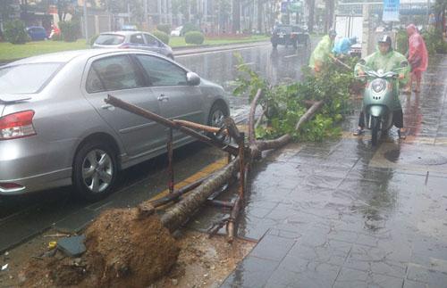 Sau bão số 1, cây xanh Hà Nội bật gốc, lộ bầu bọc nilon - 2