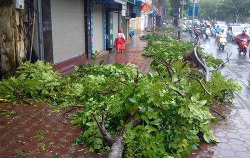 Sau bão số 1, cây xanh Hà Nội bật gốc, lộ bầu bọc nilon - 3