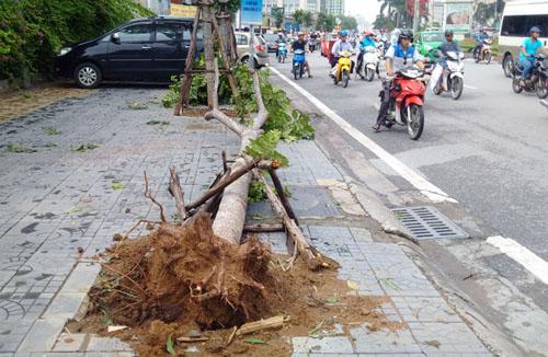 Sau bão số 1, cây xanh Hà Nội bật gốc, lộ bầu bọc nilon - 6