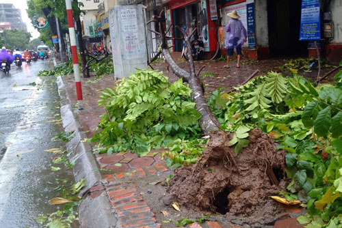 Sau bão số 1, cây xanh Hà Nội bật gốc, lộ bầu bọc nilon - 4