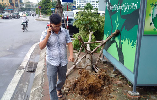 Sau bão số 1, cây xanh Hà Nội bật gốc, lộ bầu bọc nilon - 7