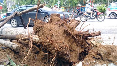 Sau bão số 1, cây xanh Hà Nội bật gốc, lộ bầu bọc nilon - 8