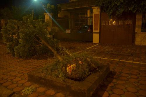 Sau bão số 1, cây xanh Hà Nội bật gốc, lộ bầu bọc nilon - 1