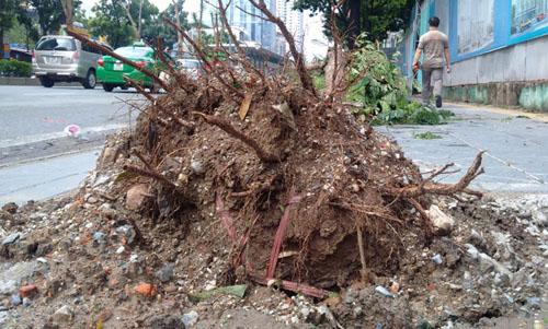 Sau bão số 1, cây xanh Hà Nội bật gốc, lộ bầu bọc nilon - 11