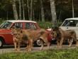 Du lịch Anh, đừng bỏ qua công viên thú hoang dã Longleat
