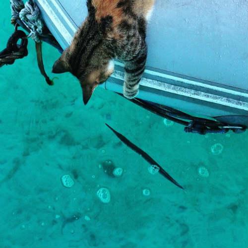 Bài học đắt giá của cô gái du lịch thế giới cùng mèo cưng - 3