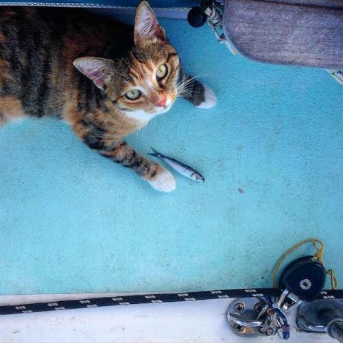 Bài học đắt giá của cô gái du lịch thế giới cùng mèo cưng - 4