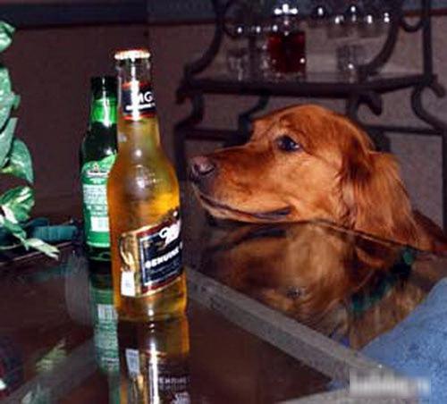 """Khi các chú """"cún cưng"""" muốn làm... """"bợm nhậu"""" - 7"""