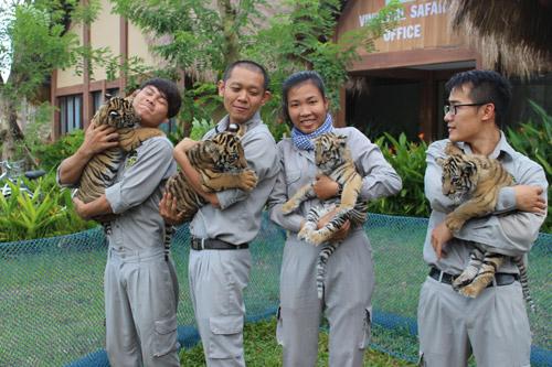 """4 """"F1"""" hổ quý Bengal chào đời tại Vinpearl Safari - 1"""