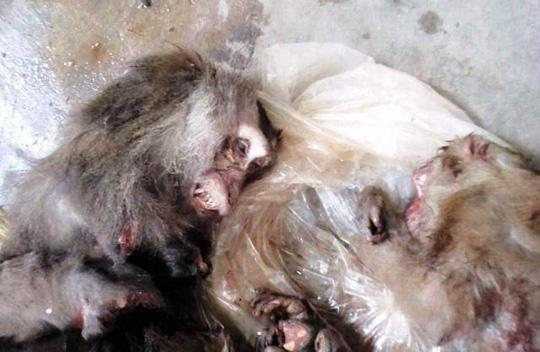 """""""Khoe"""" ảnh giết khỉ lên facebook: Phạt người sát sinh - 1"""