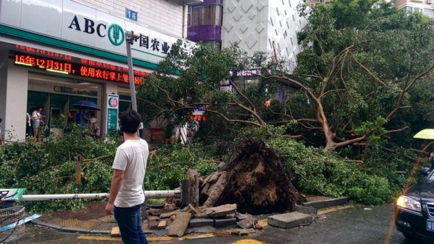 Cây đổ, nhà tốc mái khi bão số 2 càn quét Trung Quốc - 5