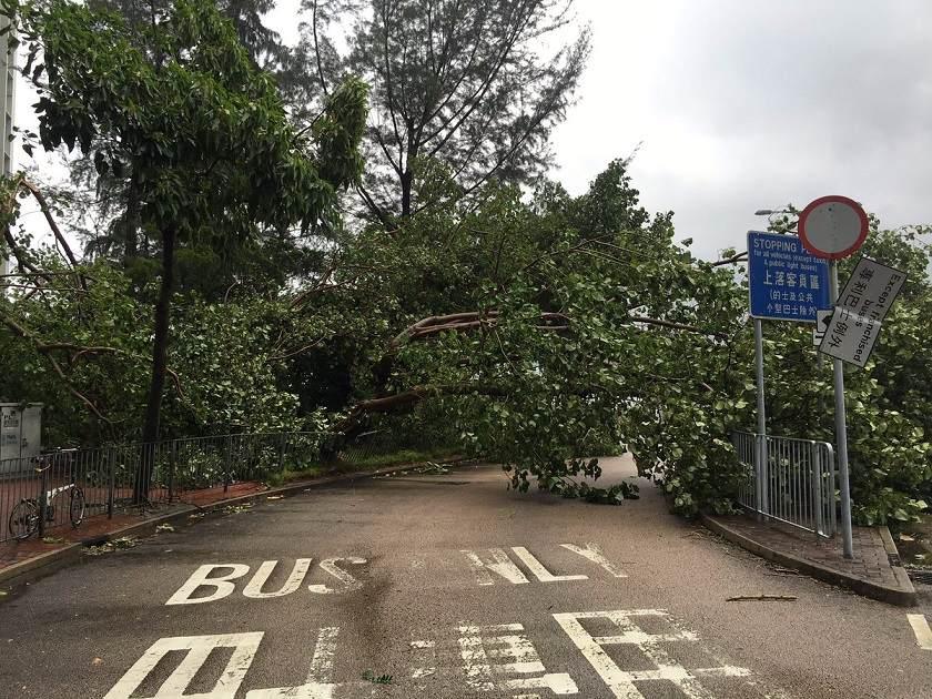 Cây đổ, nhà tốc mái khi bão số 2 càn quét Trung Quốc - 6