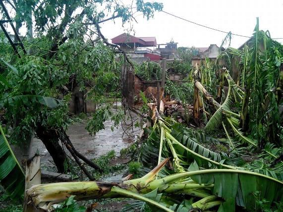 Thiệt hại lớn do bão số 1: Dự báo sai hay địa phương chủ quan? - 1