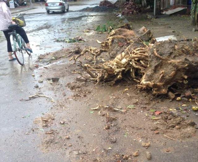 Dông lốc khủng khiếp ở Yên Bái, nhiều nhà bị thổi tung - 8