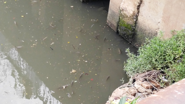 Cá lại chết, nước kênh Nhiêu Lộc đen ngòm, sôi ùng ục - 2