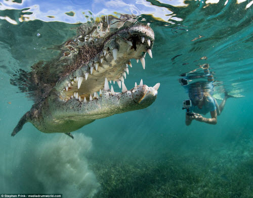 Ảnh: Cô gái xinh đẹp mạo hiểm lặn cùng cá sấu khổng lồ - 1